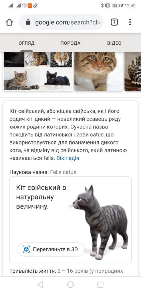 Кіт в 3D