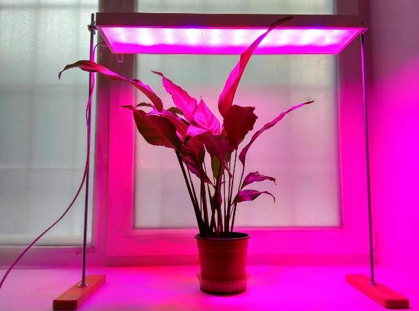 фіолетове світло рослини